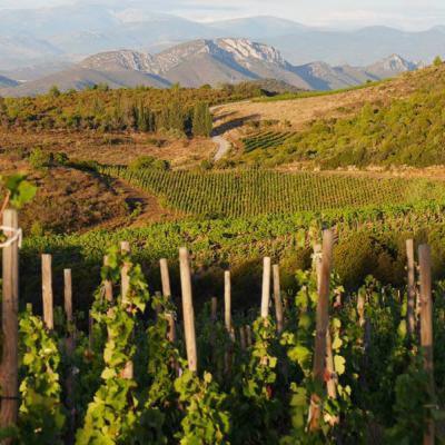 Le vignoble du Roussillon