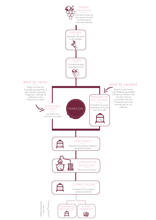 Schéma vinification vin rosé