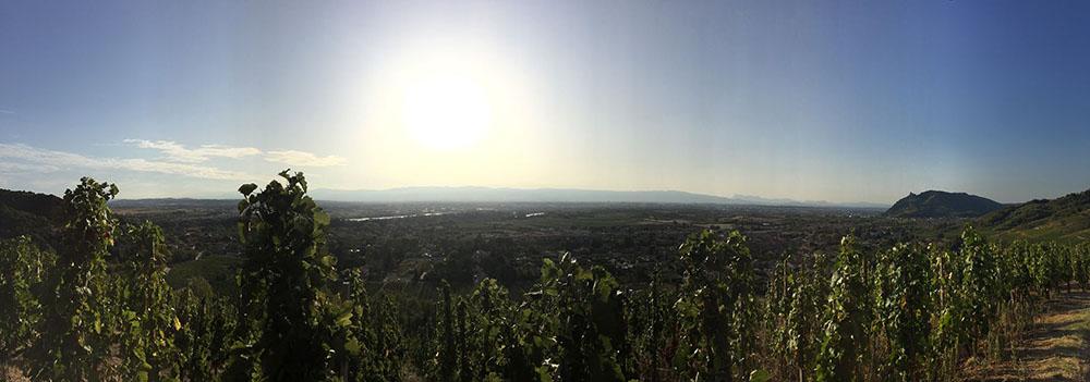 Vue panoramique depuis Cornas
